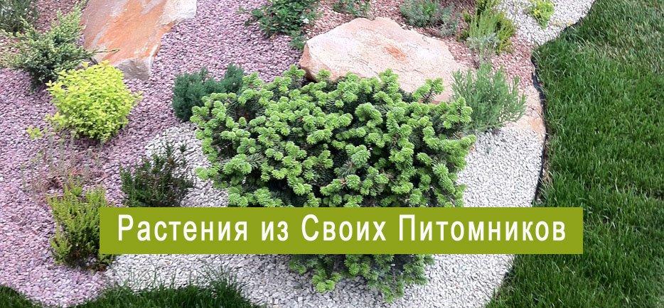 Ландшафтный дизайн от киев сад