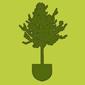 Посадка деревьев и растений