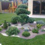 Озеленение фотогалерея хвойные растения детская площадка клумба