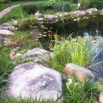 Искусственный водоем фото дизайна сада