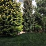 Многолетника в саду