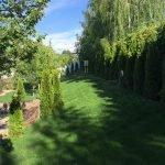 Гармония природы туи и газон от Киев Сад