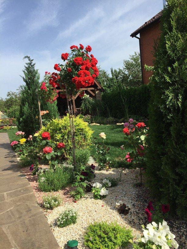 Красивые цветы в вашем саду