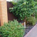 садовый участок озеленение