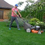 озеленение садового участка недорого