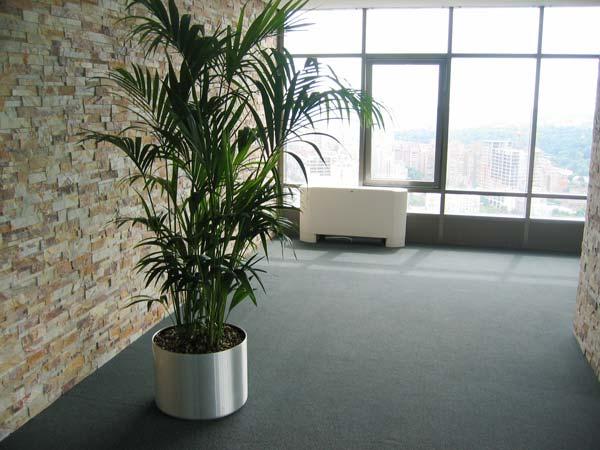 Озеленение офиса по доступной цене