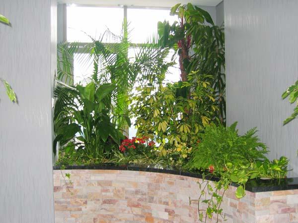 Купить растения в офис