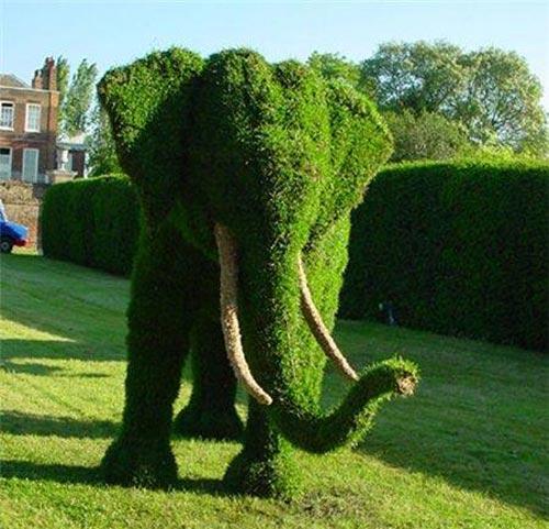 Из растений топиарное искусство