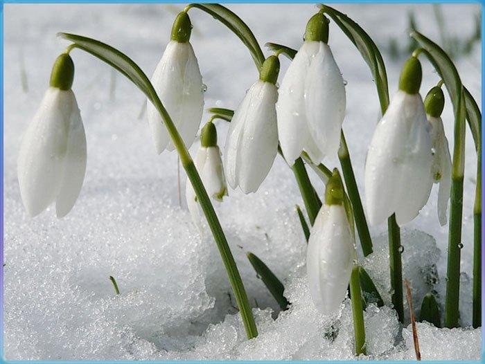 Официальный сайт ОАО  Галантус Продажа цветов