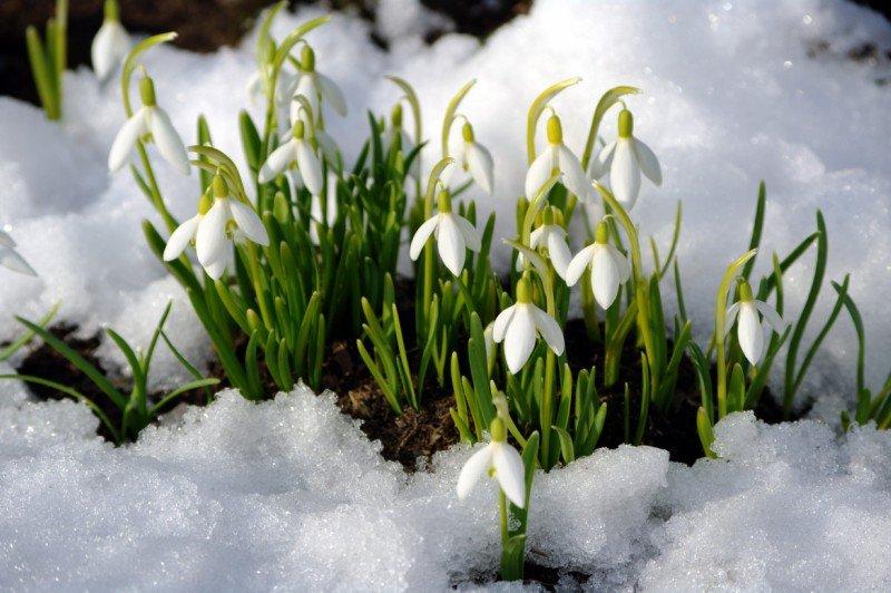 что начинает цвести в марте аллергия