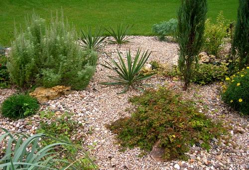 Гравийный сад: красиво, практично и удобно