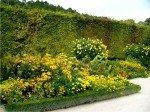 Желто-оранжевый сад