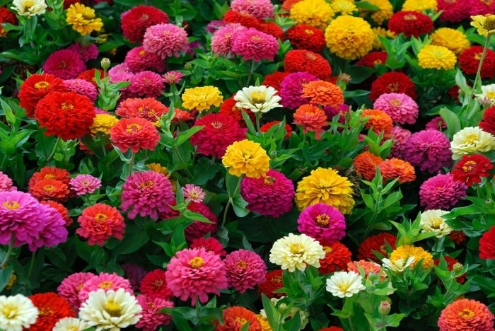 цветы веселые ребята фото