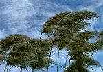 Защита от ветра в ландшафте