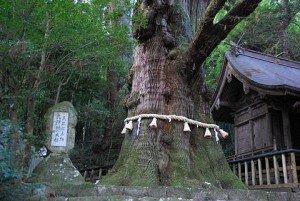 5 Свсященное дерево