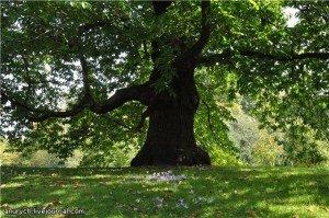 В тени дерева.