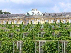 Шпалеры, украшающие террасы парка Сан-Суси