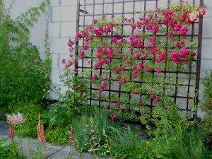 шпалера для роз
