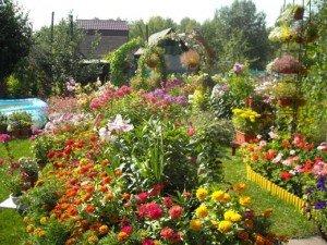 Красивые цветы в ярком цветнике без композиции