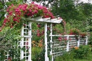 Трельяж увитый с розами