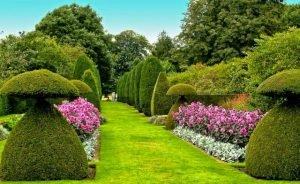 Пионы в регулярном саду