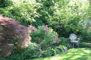 Пион в лирическом саду