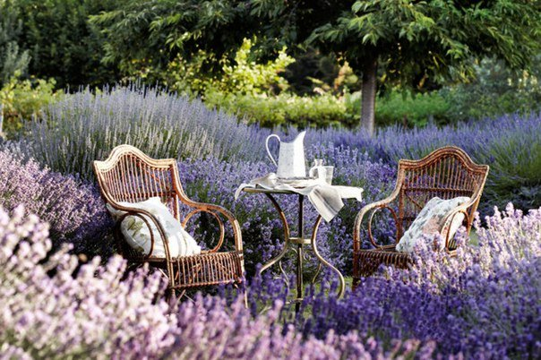 сад в прованс стиле фото