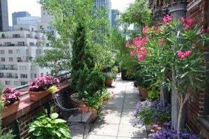 Озеленение террасы. Кадочные растения