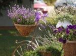 Растения для сада Прованс