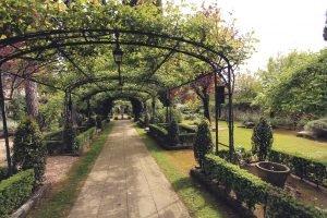 Формированные плодовые деревья на арках