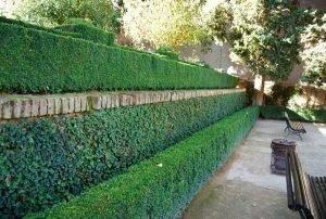 зеленая изгородь у забора