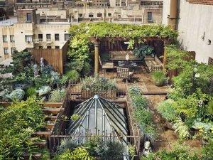 кадки в саду на крыше