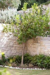 Греческий сад подпорная стенка