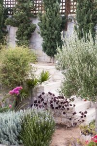 Греческий сад. Хвойные. Кипарисы.