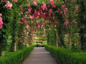 Розовый розовый сад