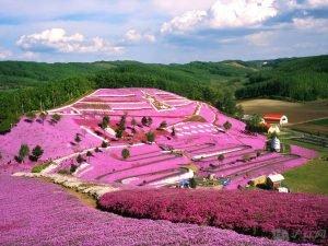 Розовый сад на Хокайдо. Япония. Сад Богов.