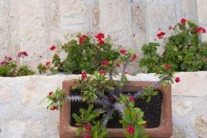 красный акцент. Греческий сад