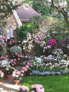 розовый весенний сад
