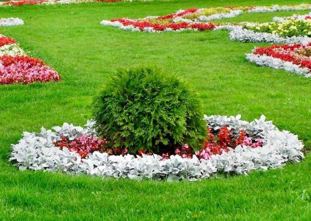 газон клумбы фото