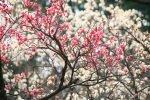 Праздник весеннего цветения