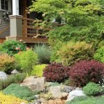 Засухоустойчивый сад