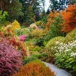 Золотая осень. Почему листья меняют цвет.