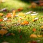 Уборка листьев.