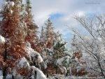 Сад под снегом.
