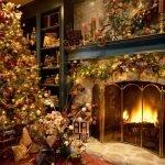 Растения символы Рождества и Нового Года