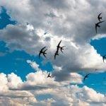 Перелетные птицы Украины в Вашем Саду