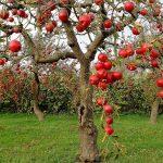 Лучшие сорта Яблок!