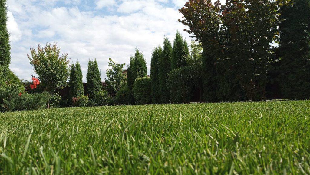 Фото газона на участке