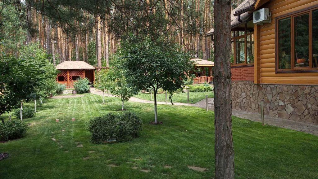Красивое дерево в саду