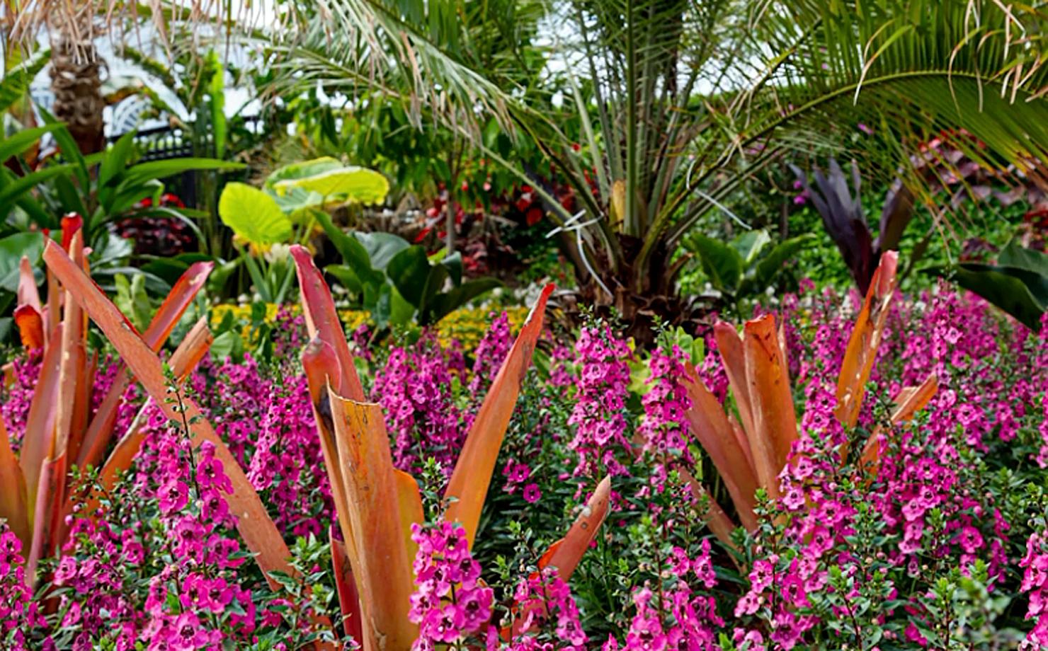 Бразильский модерн. Ботанический сад Нью Йорка